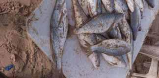 Capitaine www.kafunel.com bienfaits du poisson - 4 raisons de manger du poisson