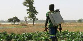 casamance-agri-jeunes-va-financer-2000-a-2500-projets-chef-d-antenne