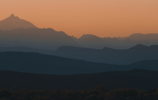 My Colleague got Stung by a Scorpion!