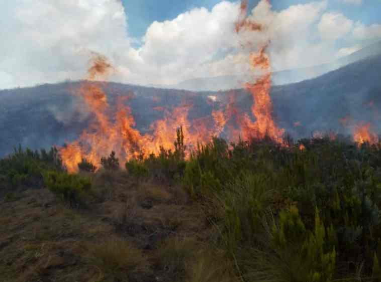 Image result for kws forest fire
