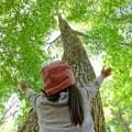 ブナの木を見上げる子供