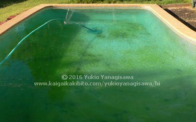 藻が繁殖して緑色になったプール