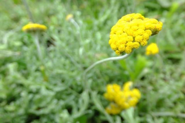 トランスカイの大地に咲くンペポの花