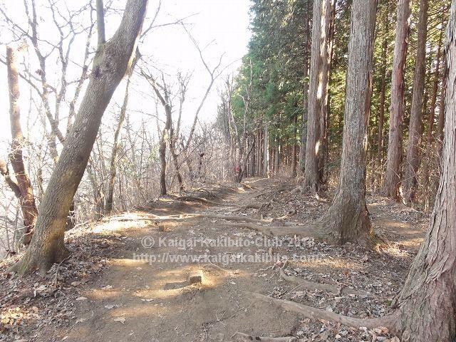 陣馬山から景信山への山道