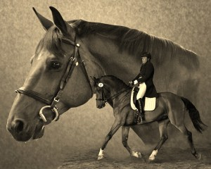 Safarie, 1999 KWPN gelding imported in 2002 from the Vandelageweg Stud in the Netherlands as a 3 yo 2002 Region V Colt Champion 2012 USDF Breed Champion, KWPN, Grand Prix Freestyle
