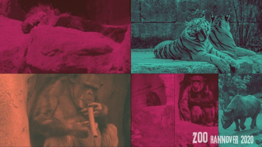 Zoo Hannover Collage