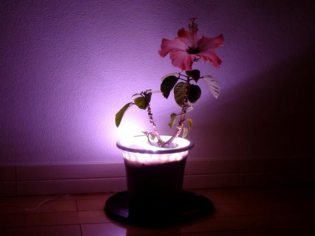 LEDテープライト【サンプル1】