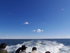 東京湾散骨は東京海洋散骨