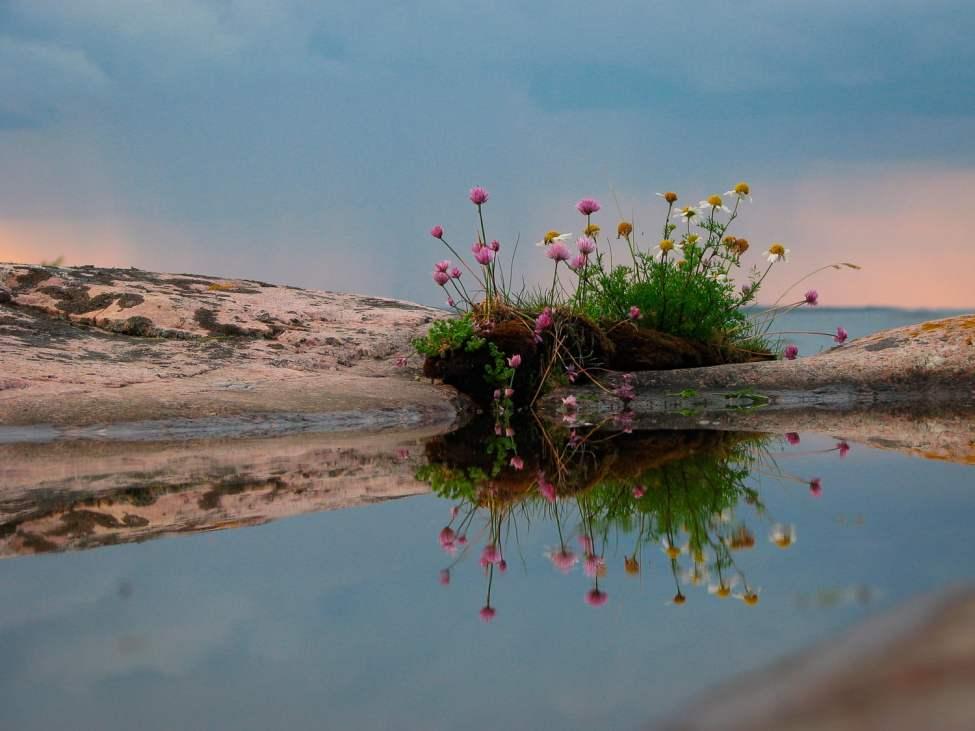 Blommig spegling med horisontvy