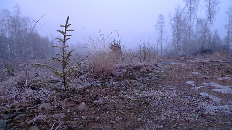 Finfin morgon