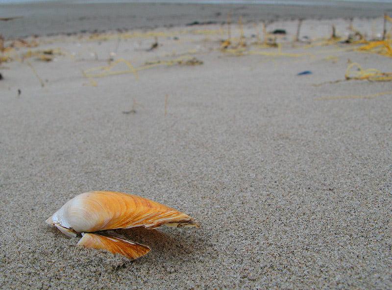 På stranden vid Vegeåns mynning