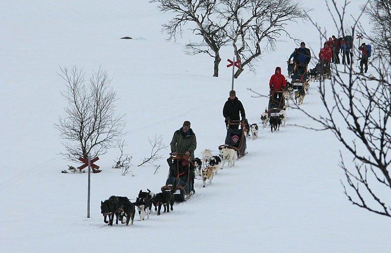 hundslädar på väg mot gåsen, vi är på väg därifrån