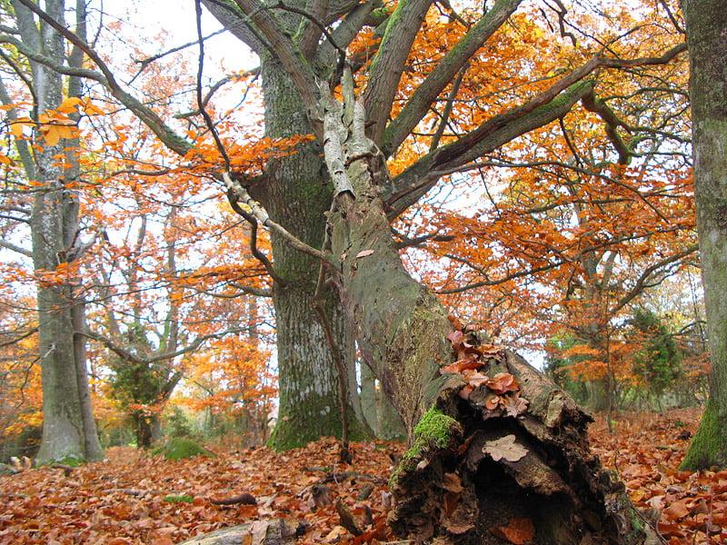 Gamla träd och fina färger