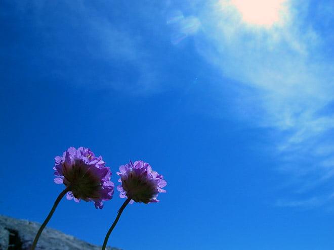 Blommar här och där