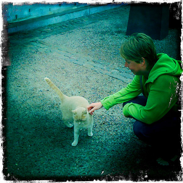 Katt i Karlskrona