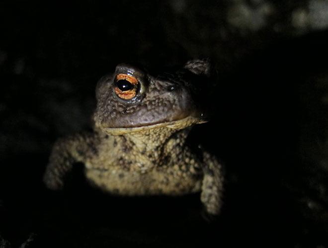 Pia ljussätter Paddor i mörkret. Blev klart fräckt!