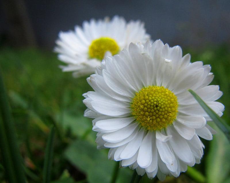 Det blommar fortfarande i skärgården