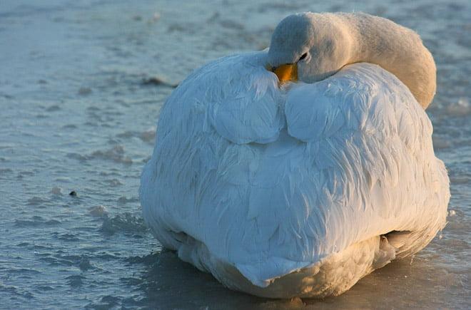 Några gillar kylan medan andra ser ut att försöka hushålla på värmen mer
