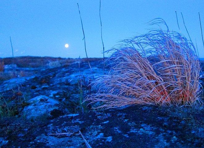 Kvällsljus och månrackare