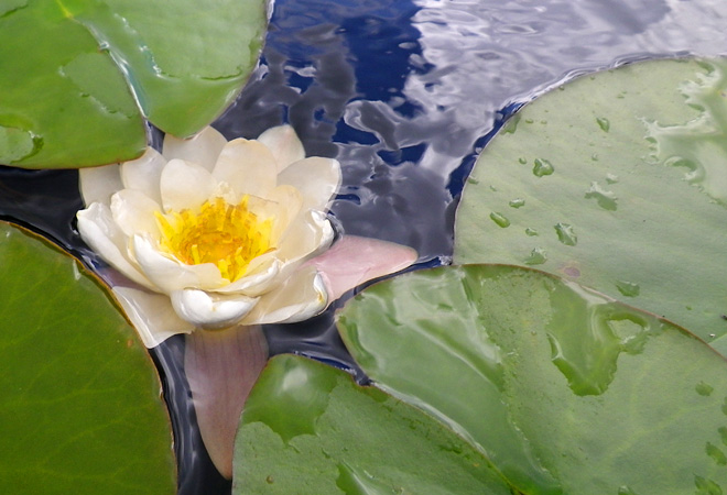 Växer bra även i sjön! inte bara i svampskogen och grönsakslandet :)