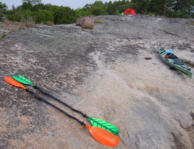 Krokigar finfärgade Robsonpaddlar på Karlskär i Misterhults skägård