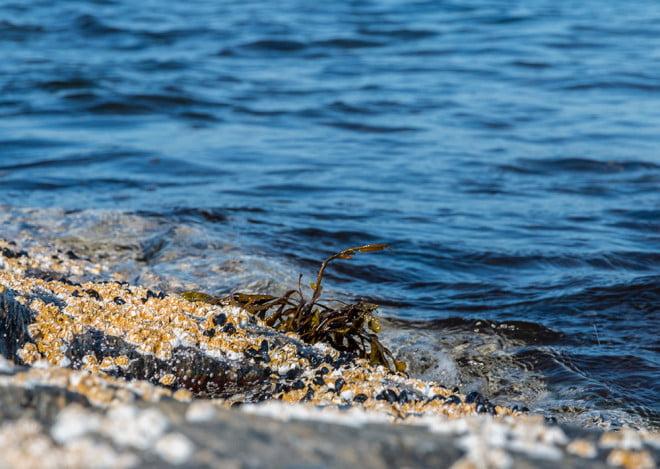 Klippor, havstulpaner och lite vatten