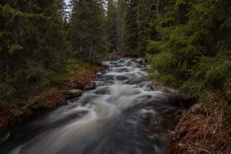 Fina bäckar och finfin skog