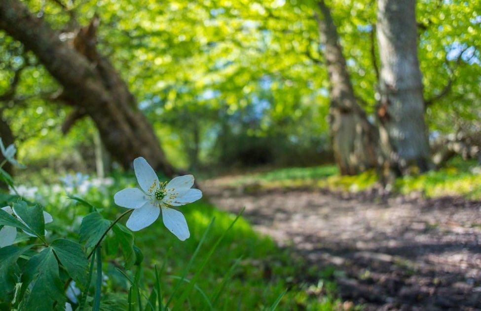 Grönskar och blommar för fullt längs mysiga stigar
