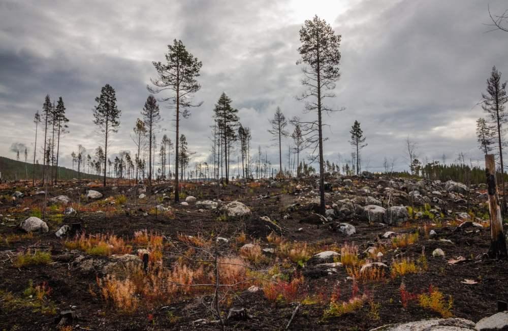 Cyklade förbi lite eldhärjad skog