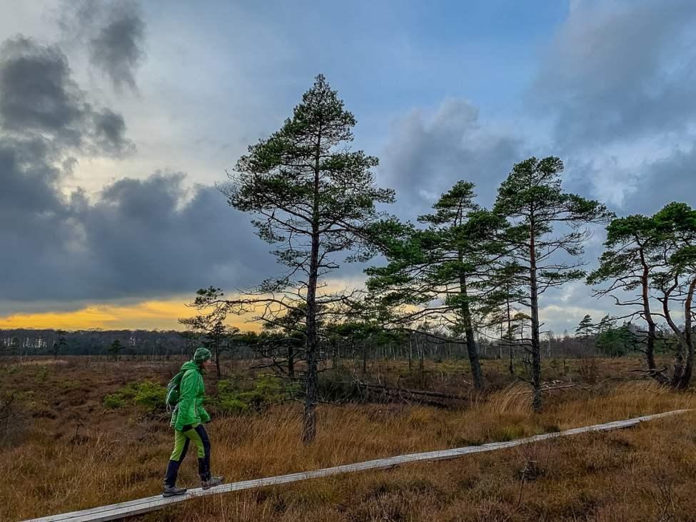 Spångigt mosshäng uppe på Hallandsåsen
