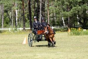 Gotland 031