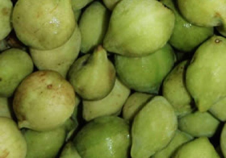 Kakadu Plum Extract Wholesale