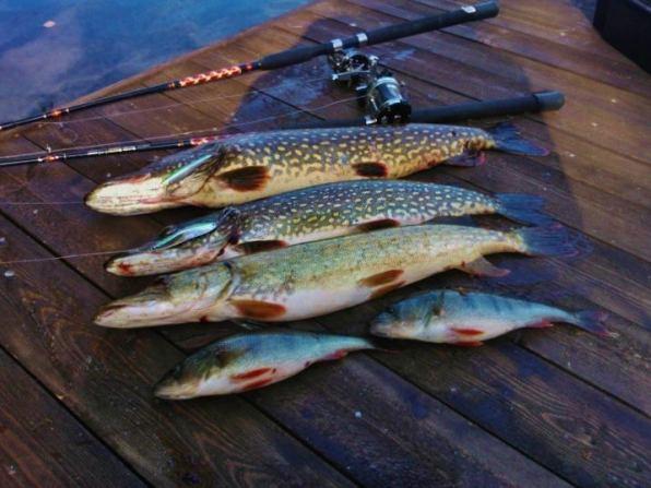 Haukisaalista eräältä kalastusmatkalta