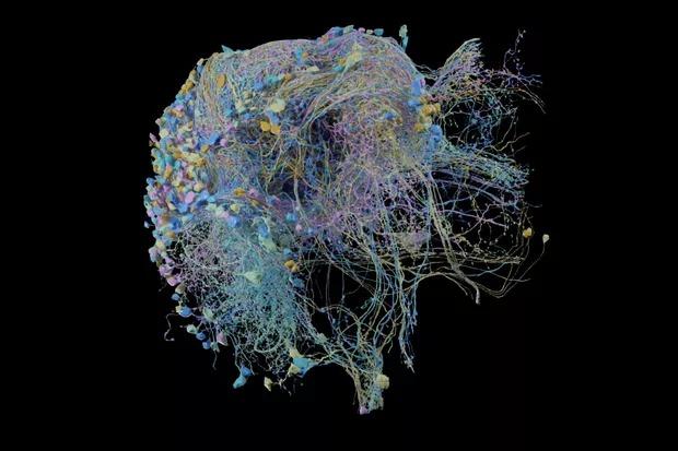 Google създаде най-подробната в света 3D невронна карта на мозъка