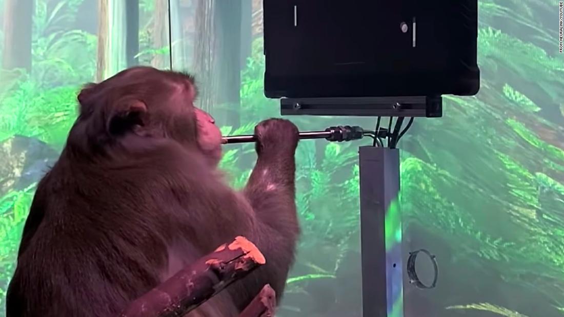 Neuralink показа демонстрация на маймуна, която играе Pong с мисълта си