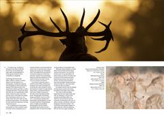 LPM-Psycho-Sunrise-page3-4