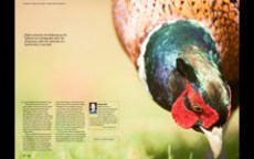 2013.04 LPM Bird Photography article pages7-8