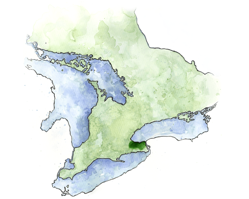 Watercolour map of Ontario, Niagara region by Kaleigh Bulford.
