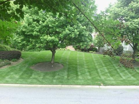 Charlotte Lawncare
