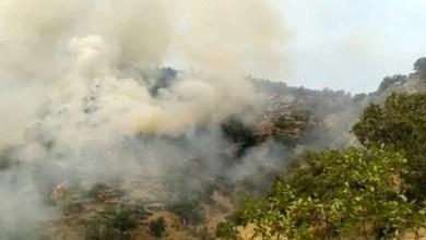 تصویر ۴۰ درصد جنگلهای خائیز در آتشسوزی نابود شد