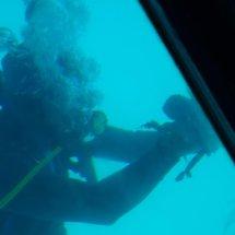 Bateau - Poulpe présenté par plongeur