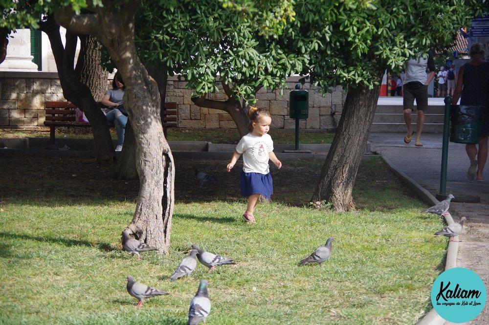 Kali et les pigeons