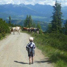 Liam chasse les trésors ou les vaches?