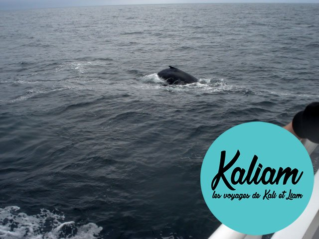 usa-baleine-cape-code-01