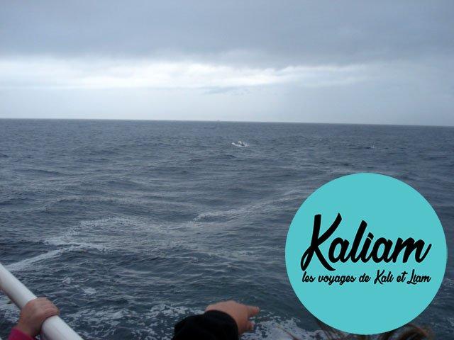 usa-baleine-cape-code-03