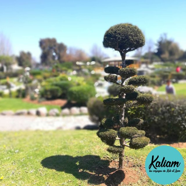 An awesome Japanese garden in Chile ! Un fabuleux jardinhellip