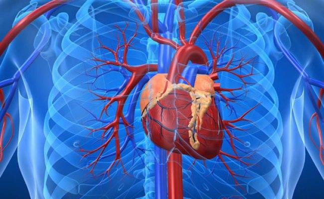 Iskemik Kalp Hastalığı Belirtileri Ve Tedavisi