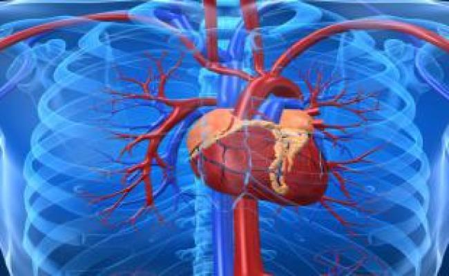 Kalp Pili Kalp Pili özellikleri Ve Faydaları Kalpagrisi