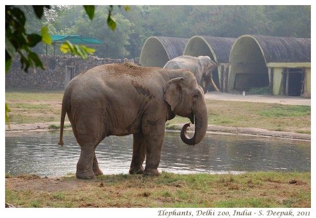 Beautiful Animal Wallpapers Animals From The Delhi Zoo India Kalpana Image Archives