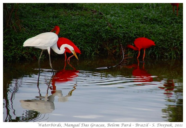 Beautiful Wild Animals Wallpapers Images Of Birds Of Amazon Forest Mangal Das Gra 231 As